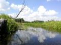 Река Снов. Фото И. Ящук
