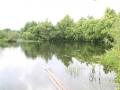 Река Снов. Фото Н. Лещенко