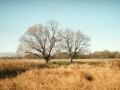Возле реки Снов. Фото С. Волошина