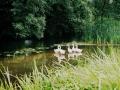 Река Снов. Фото Ю.Горлова