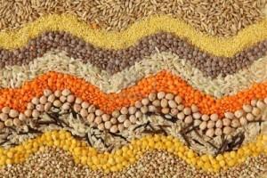экспорт зерновых (пшеница, гречка, овес, кукуруза, рожь, горох)